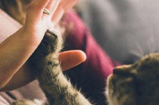 The Human-Animal Connection〜アニマル・リテラシーを身に付けるための人と動物の関係学カリキュラム〜