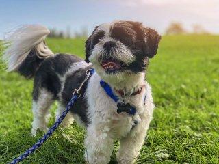 うちの愛犬、アニマルセラピーに参加できる?〜動物介在介入(AAI)参加動物の評価のための指針〜