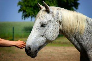【動物介在プログラム上級編オンライン講座シリーズ】「動物やボランティアの適性とは?」 セミナー資料