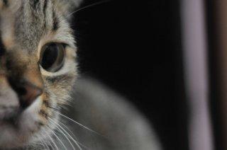 【動物虐待と対人暴力の連動性を探るオンライン講座シリーズ】「動物虐待の目撃が及ぼす影響〜積極的に暴力に加わらなくても…〜」 セミナー資料