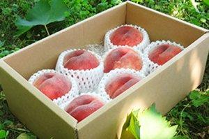 桃【中玉7個】2kg《新潟県特別栽培認証》白根自慢の桃