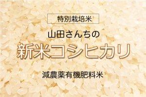 やまださんちの 新米!こしひかり【特別栽培米】  10kg 減農薬有機肥料米