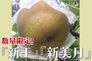 新潟限定の新品種梨「新王」「新美月」2kg【5~7個】数量限定 ご当地産直のお得なキャンペーン!首都圏でも人気!
