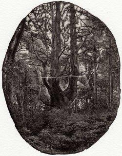 齋藤 僚太 木口木版画「森は静かに語る」*シート