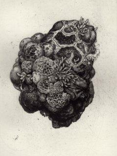 櫻井 萌香 銅版画「parasitic」*シート