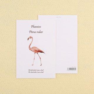カード【フラミンゴ】100mmX148mm