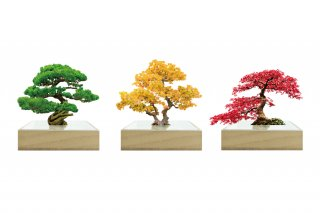 bonsai ミニ