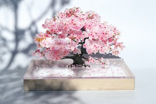 <img class='new_mark_img1' src='https://img.shop-pro.jp/img/new/icons5.gif' style='border:none;display:inline;margin:0px;padding:0px;width:auto;' />bonsai S 桜