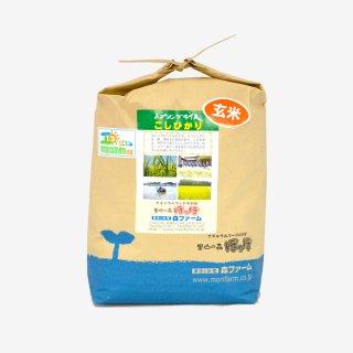 スプリングライス こしひかり<br>(玄米) 5kg
