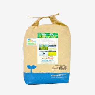 スプリングライス ミルキークィーン(無洗米) 5kg
