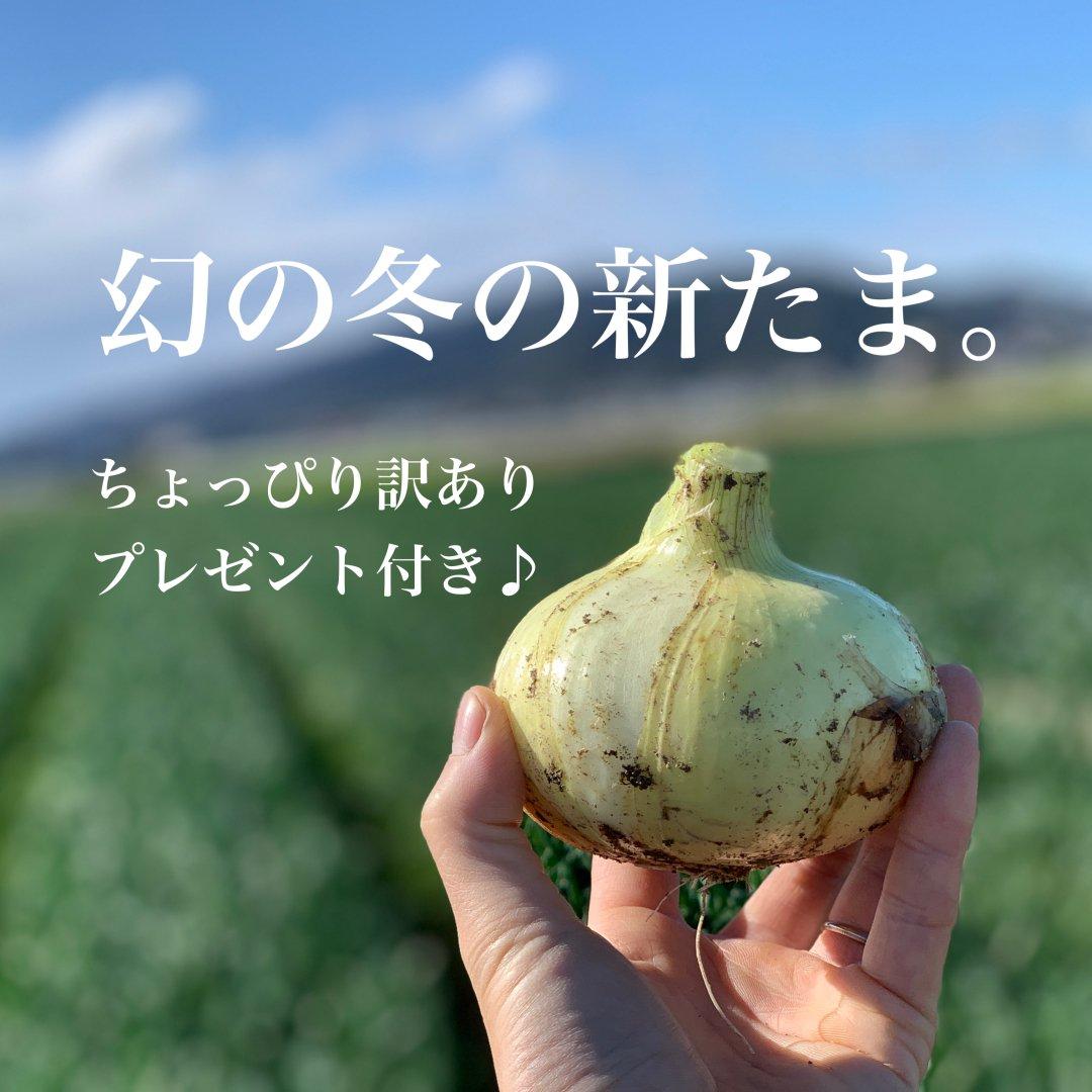 mama-yasai 幻の冬の新たま5kg  【個性派!新たま応援セット+おかわりレタスを2個プレゼント♪】