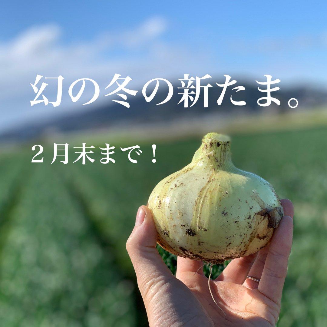 【大人気】mama-yasai 幻の冬の新たま 5kg 【子どもたちがパクパク食べちゃう♪冬の新たまねぎ】【2月末まで】