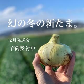 【ご予約】mama-yasai 幻の冬の新たま 5kg 【子どもたちがパクパク食べちゃう♪冬の新たまねぎ】【今ご注文で2月上旬頃〜発送】