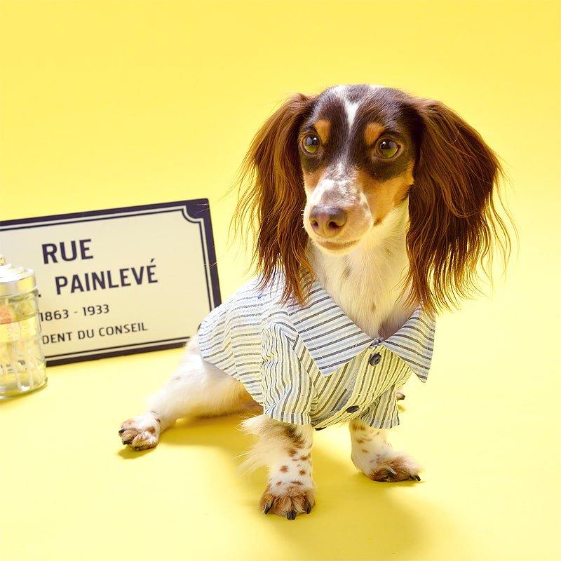 マルチストライプシャツ (Yellow)の画像