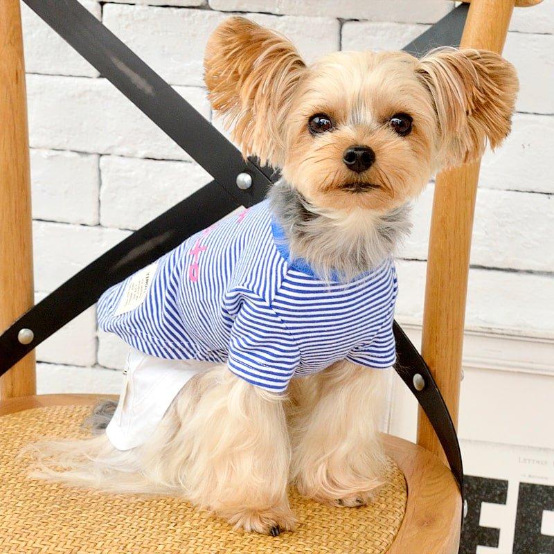 TTボーダーTシャツの画像