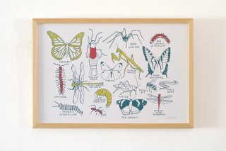 Claudia Pearson / Brooklyn Bugs