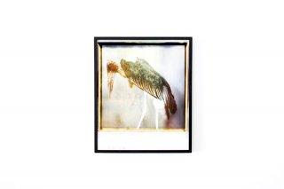 Dan Isaac Wallin / Leptoptilos Crumeniferus