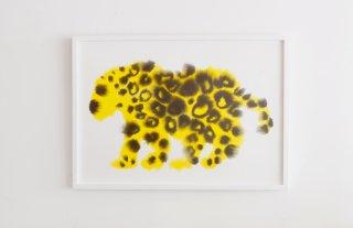 Rop van Mierlo / Jaguar
