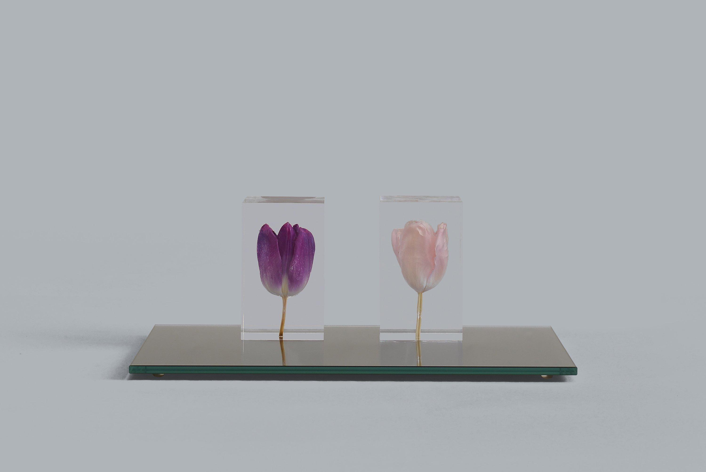 ToBL Tulip