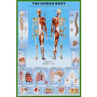 スカルポスター THE HUMAN BODY