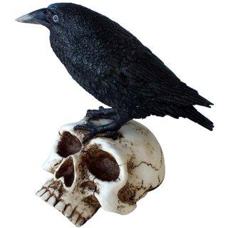 レイヴン オン スカル スタチュー(像)Raven on Skull Statue Figure
