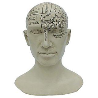 アルケミストスタチュー骨相学ヘッド Alchemist Statue Head Phrenology