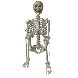 【同梱不可】ディスプレイガイコツ ハンギングスケルトン−Lサイズ Hanging Display Skeleton-L