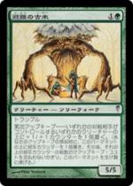 避難の古木/Sheltering Ancient(CSP)【日本語】