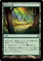 鮮烈な林/Vivid Grove(LRW)【日本語】