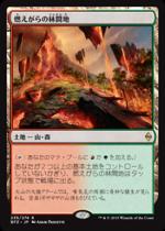 燃えがらの林間地/Cinder Glade(BFZ)【日本語】