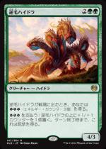 逆毛ハイドラ/Bristling Hydra(KLD)【日本語】