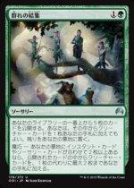 群れの結集/Gather the Pack(ORI)【日本語】