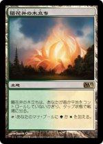 陽花弁の木立ち/Sunpetal Grove(M13)【日本語】