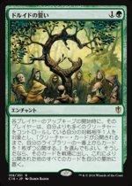 ドルイドの誓い/Oath of Druids(C16)【日本語】