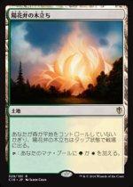 陽花弁の木立ち/Sunpetal Grove(C16)【日本語】