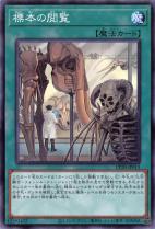 標本の閲覧【ノーマル】CP20-JP013