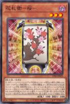 花札衛−桜−【ノーマル】CP20-JP029