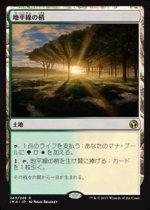 地平線の梢/Horizon Canopy(IMA)【日本語】