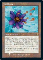 睡蓮の花/Lotus Bloom(TSR)【日本語FOIL】