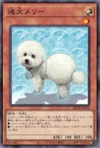 迷犬メリー【ノーマルレア】BODE-JP035