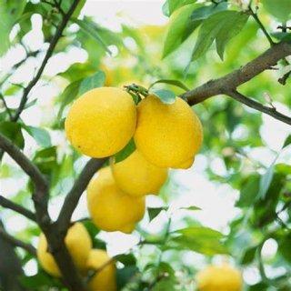レモン精油 5ml