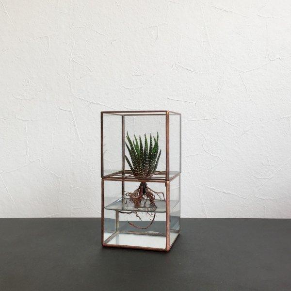 "Hydro 80:80 [Copper]+ 植物セット ""マツノユキ"""