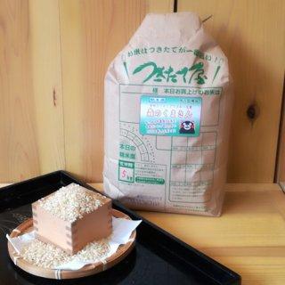 【令和2年産】<br>熊本県産<br>森のくまさん 5kg