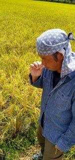 稲穂の茎まで甘い!<br>特別栽培米【令和2年産・新米】<br>兵庫県丹波市<br>宮垣さんの夢ごこち 5�