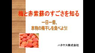 ハタヤス塾・座学<br>『梅と赤紫蘇と梅醬番茶を知る』<br>(8/23)