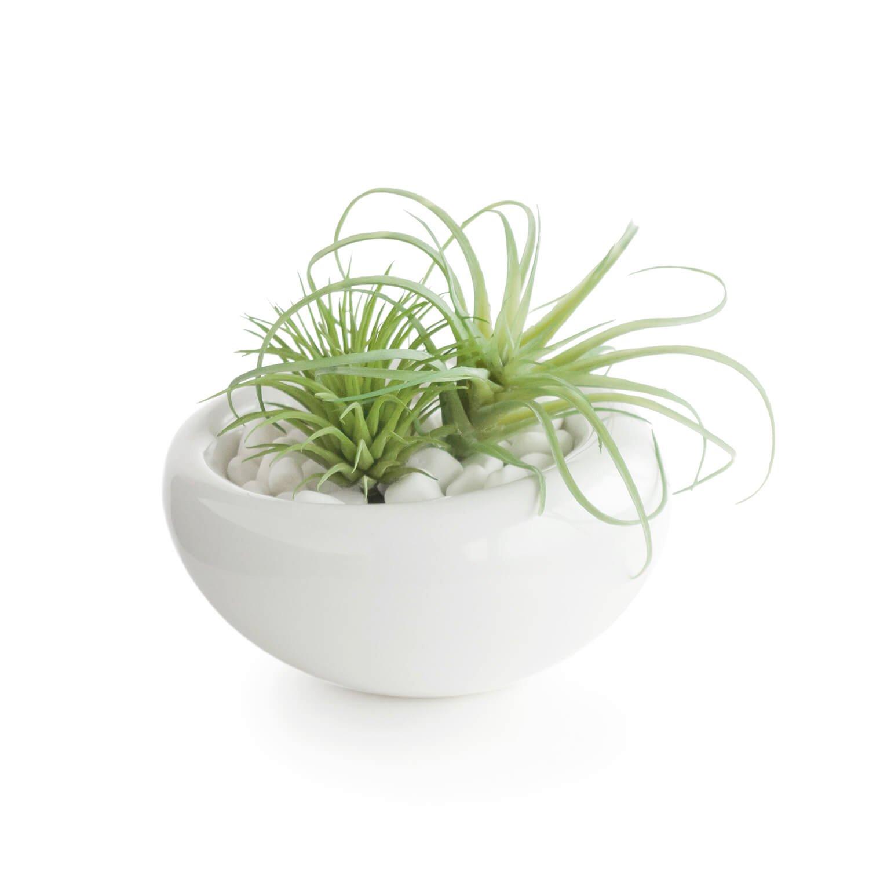多肉植物ミックスD 白陶器S フェイクグリーン