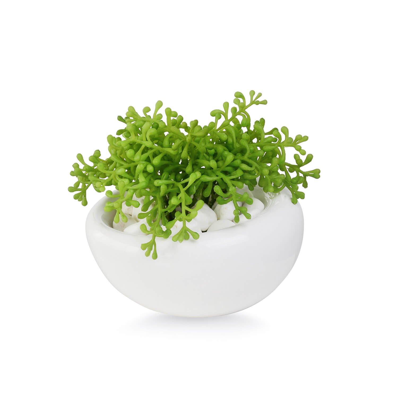 ベビーセダム 白陶器S フェイクグリーン