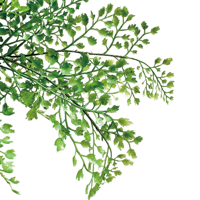 アジアンタム 白陶器S フェイクグリーン