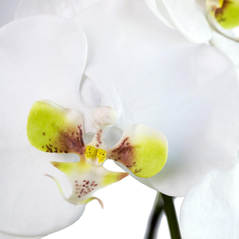 胡蝶蘭 供花 5本立ち アーティフィシャルフラワー アートフラワー