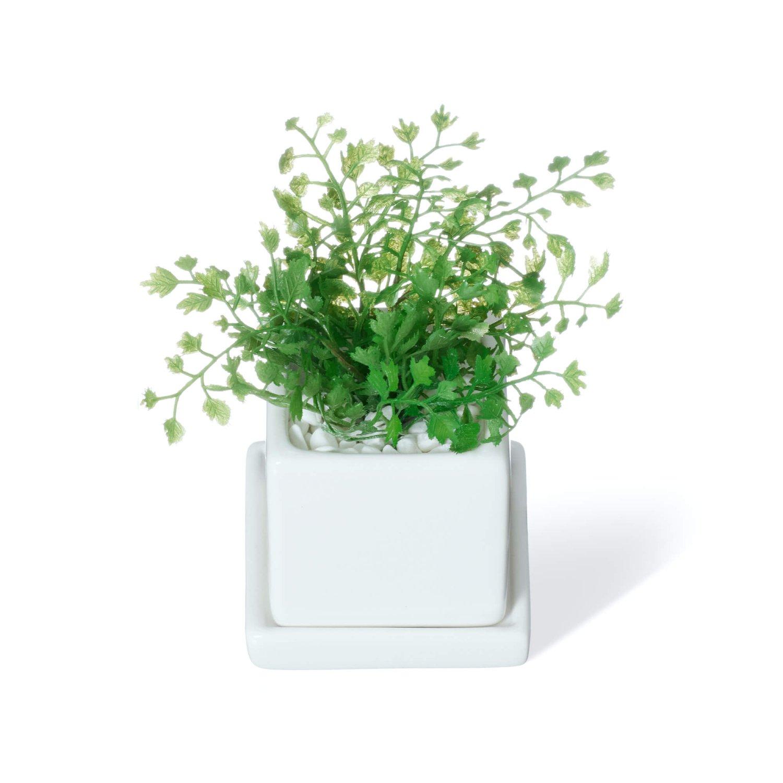 ミリオン・シュガーバイン・アジアンタム 皿付ミニベース(3個セットA) フェイクグリーン